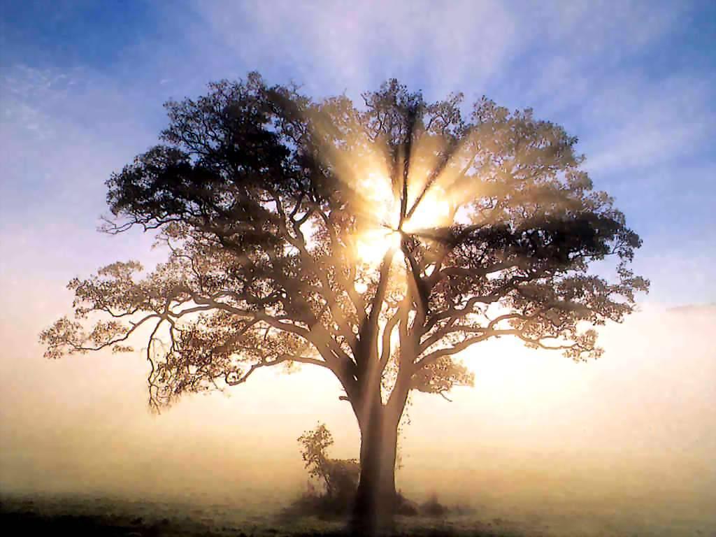 The Mighty Oak Tree