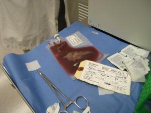 Munira Stem Cell 008